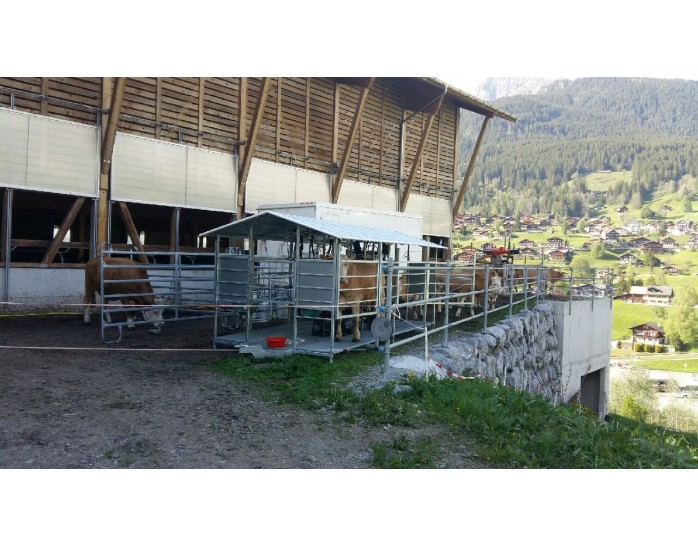 Keturių vietų melžimo aikštelė Šveicarijos ūkininkui
