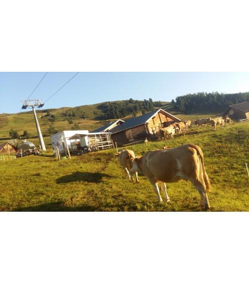 Mobili melžimo aikštelė MOTECH4 su 40 L pieno kolba